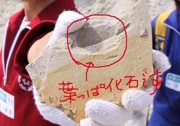 葉っぱの化石です。