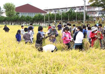 田んぼは学校のすぐそばです。みんな楽しそうでした。